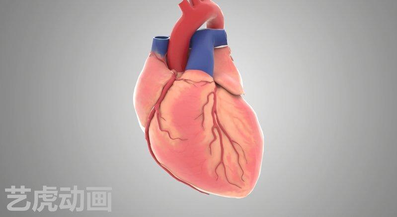 心脏手术三维动画图