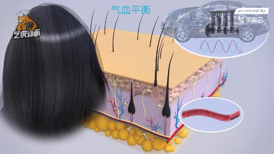 医学三维成像动画-头发健康理论