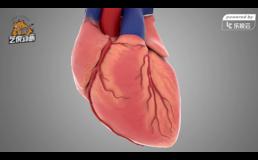 心脏跳动医学三维动画