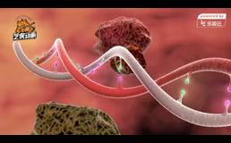 三维医学动画演示DNA突变过程
